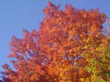 fall colours autumn automne quebec